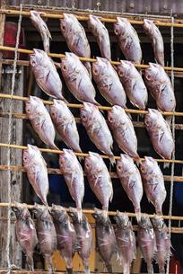 魚の干物の写真素材 [FYI04780613]