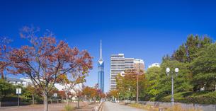 福岡県 風景 福岡タワー 昼景の写真素材 [FYI04780696]