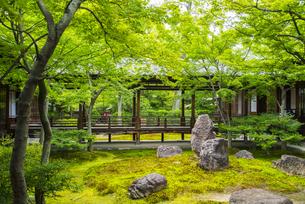 新緑の建仁寺 潮音庭の写真素材 [FYI04780833]