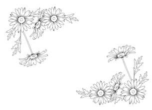 デイジーの手描き線画イラストのイラスト素材 [FYI04780891]