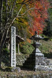 飛鳥川上坐宇須多伎比売命神社 紅葉の写真素材 [FYI04781024]