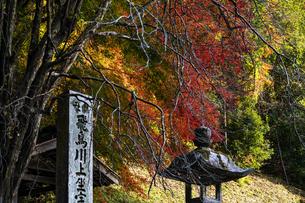 飛鳥川上坐宇須多伎比売命神社 紅葉の写真素材 [FYI04781035]