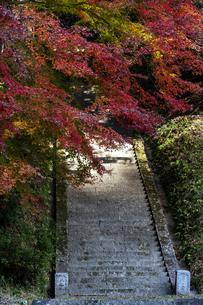 飛鳥川上坐宇須多伎比売命神社 紅葉の写真素材 [FYI04781036]