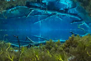 倒木が沈む神秘的な神の子池の写真素材 [FYI04781144]