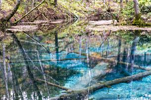 倒木が沈む神秘的な神の子池の写真素材 [FYI04781146]