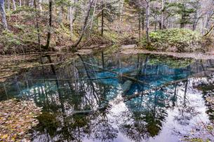 倒木が沈む神秘的な神の子池の写真素材 [FYI04781148]