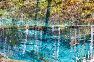 倒木が沈む神秘的な神の子池の写真素材 [FYI04781151]