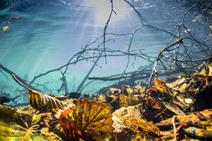 静かに秋を終えるオンネトーの湖底の写真素材 [FYI04781159]