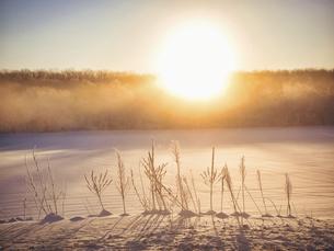 冬の朝日と植物 の写真素材 [FYI04781294]