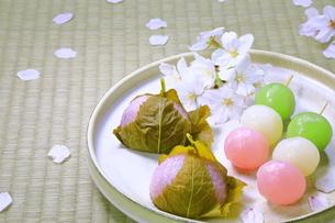 春の和菓子とさくらの花びらの写真素材 [FYI04781367]