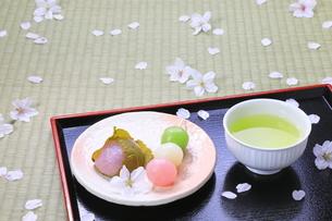 春の和菓子とさくらの花びらの写真素材 [FYI04781369]
