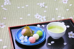 春の和菓子とさくらの花びらの写真素材 [FYI04781370]