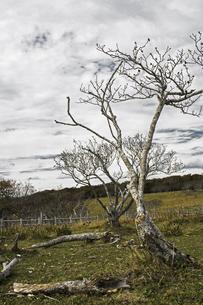 北海道の秋の枯野の風景の写真素材 [FYI04781388]