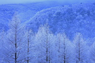 1月 八千穂高原の霧氷の写真素材 [FYI04781413]