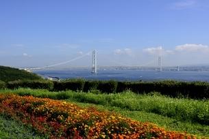 淡路サービスエリアから明石海峡大橋の写真素材 [FYI04781514]