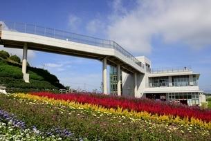 あわじ花さじき,天空の花園花壇にサルビアの花とテラス館の写真素材 [FYI04781517]