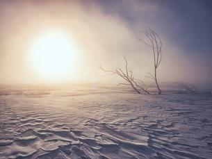 気嵐と枯れ木の写真素材 [FYI04781530]