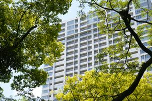 緑に囲まれたマンションの写真素材 [FYI04781609]