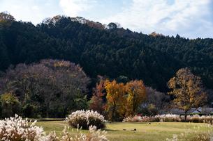 国営飛鳥歴史公園 石舞台地区 秋景の写真素材 [FYI04781842]