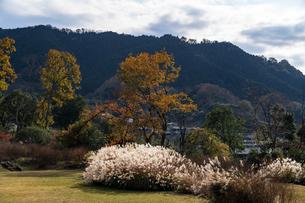 国営飛鳥歴史公園 石舞台地区 秋景の写真素材 [FYI04781843]