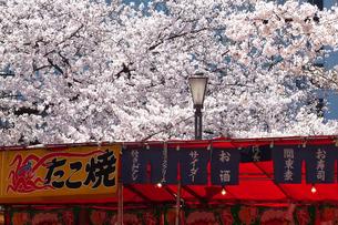 桜と露店の写真素材 [FYI04781853]