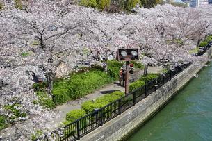 桜とライトアップ用の照明灯の写真素材 [FYI04781854]