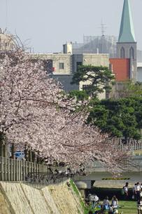 芦屋川沿いの桜並木の写真素材 [FYI04781879]
