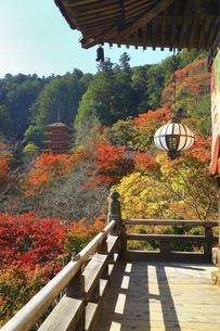 紅葉の長谷寺 の写真素材 [FYI04781982]