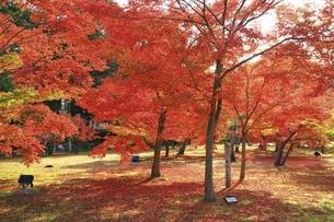 紅葉の後楽園の写真素材 [FYI04781995]
