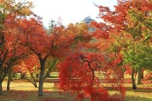 紅葉の後楽園の写真素材 [FYI04781997]