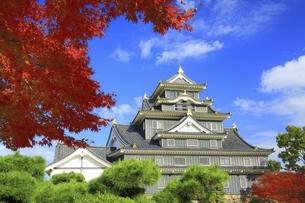 秋の岡山城の写真素材 [FYI04782003]