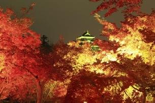 秋の幻想庭園 岡山後楽園の写真素材 [FYI04782014]