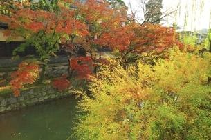 秋の倉敷美観地区の写真素材 [FYI04782045]