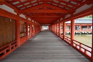 赤が一際立つ厳島神社の参拝路の写真素材 [FYI04782277]