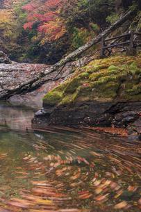 秋の御手洗渓谷(奈良県)の写真素材 [FYI04782348]