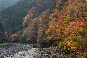 秋の川迫川溪谷(奈良県)の写真素材 [FYI04782349]
