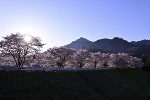 武甲山と桜並木の写真素材 [FYI04782517]