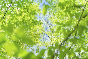 新緑の写真素材 [FYI04782535]