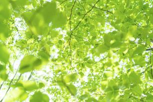 新緑の写真素材 [FYI04782540]