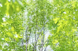 新緑の写真素材 [FYI04782542]