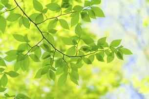 新緑の写真素材 [FYI04782546]
