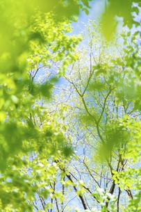 新緑の写真素材 [FYI04782548]