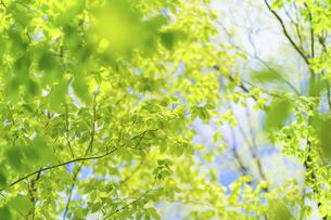 新緑の写真素材 [FYI04782551]