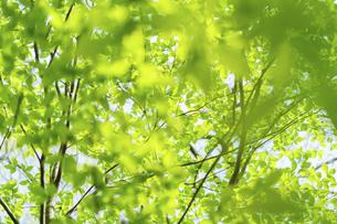 新緑の写真素材 [FYI04782553]