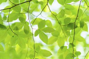 新緑の写真素材 [FYI04782557]