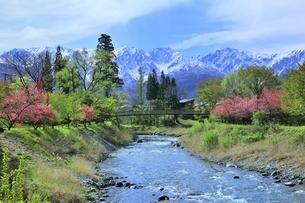 大出の吊り橋と姫川に白馬三山の写真素材 [FYI04782693]