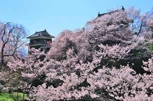 上田城 南櫓とサクラの写真素材 [FYI04782709]