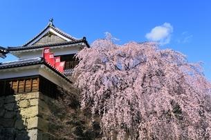上田城 北櫓とサクラの写真素材 [FYI04782713]