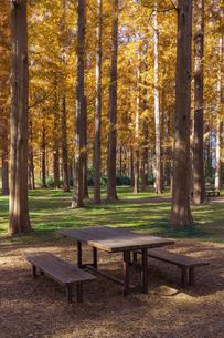 水元公園のメタセコイアとベンチ【縦】の写真素材 [FYI04782915]