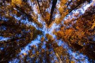 水元公園のメタセコイアの写真素材 [FYI04782918]